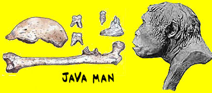 Java_man